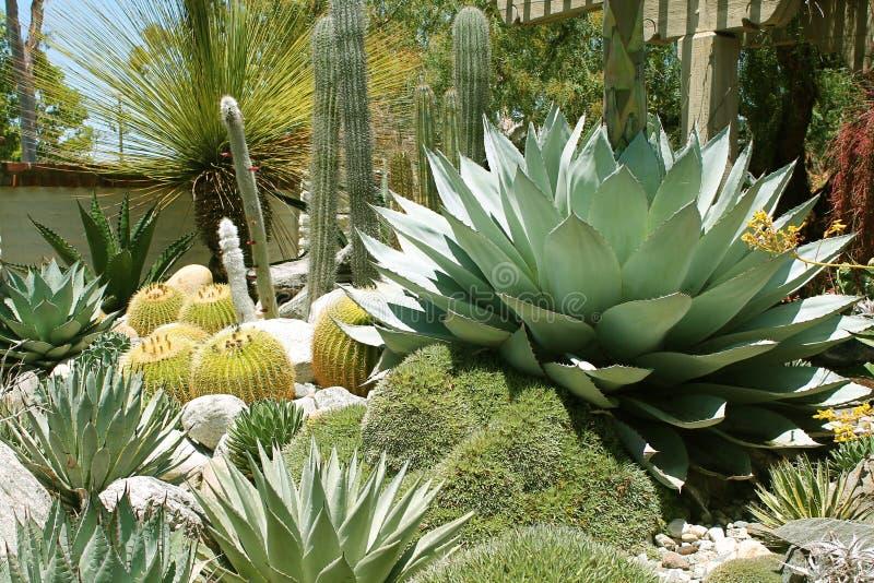Kaktusa i sukulentu ogród przy Descanso ogródami obraz royalty free