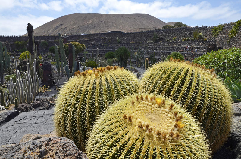 Kaktusa ogród w Guaiza, Lanzarote obraz royalty free