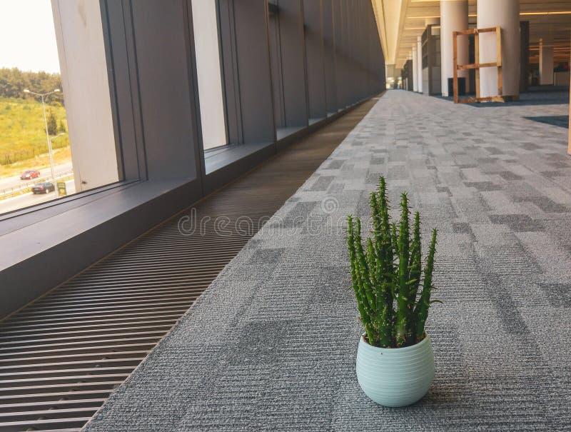 Kaktusblomma i kontoret royaltyfria bilder