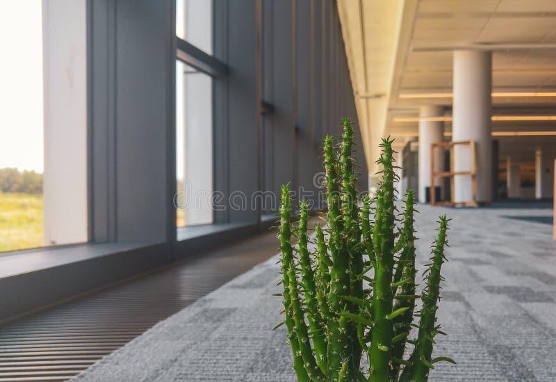 Kaktusblume im Büro lizenzfreie stockfotografie