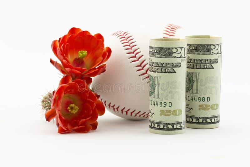 Kaktusblumen mit Baseball stockfoto
