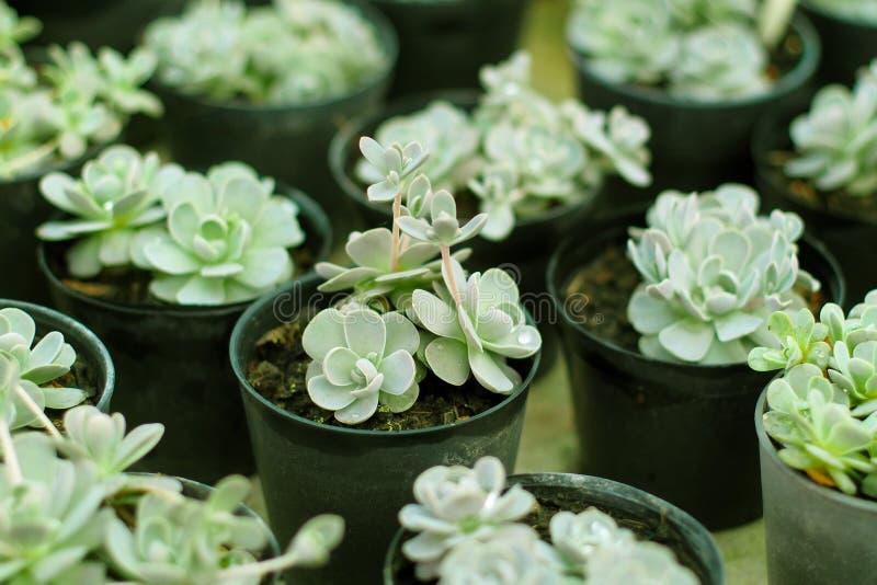 Kaktusbotanisk trädgård fotografering för bildbyråer