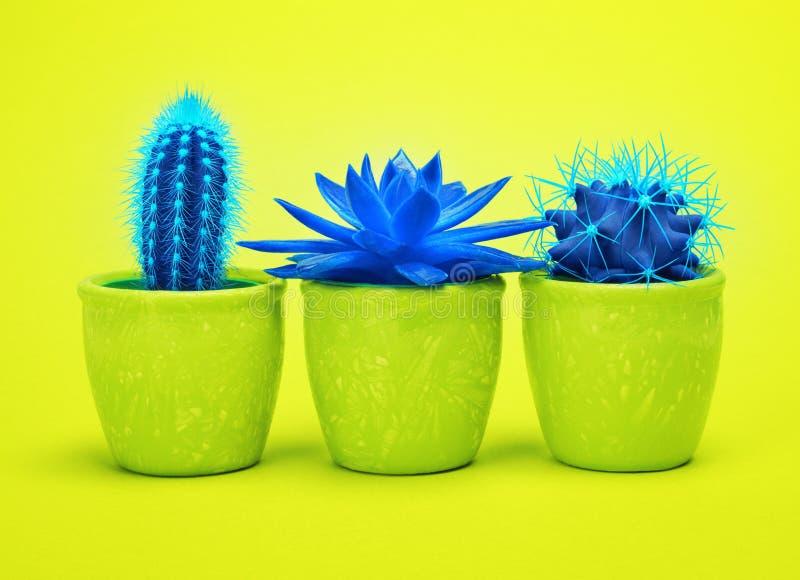 Kaktuscloseup Art Fashion Design Kakturs i för sommarstilleben för keramisk kruka minsta begrepp Blått neonlynne på gul bakgrund arkivbild