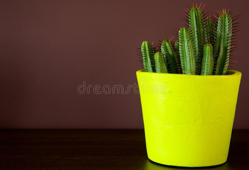 Kaktusdekoration in einem gelben Potenziometer stockfotografie