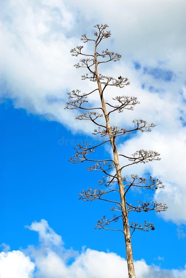 kaktusdollarsilver royaltyfria bilder