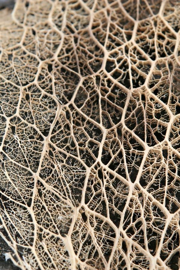 kaktusgaller arkivfoto