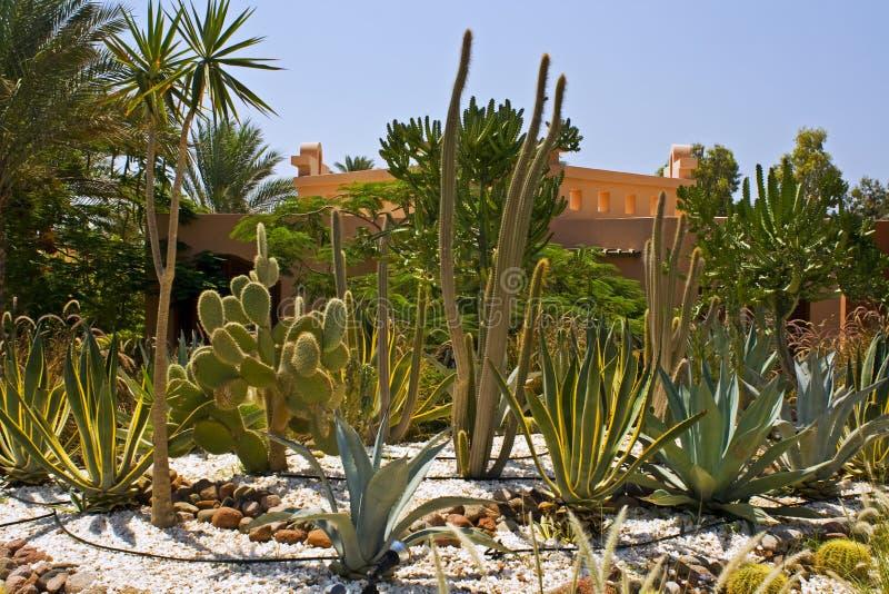 Kaktusgarten stockbilder