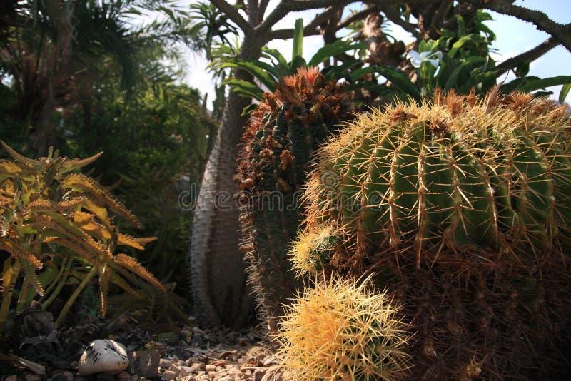 Kaktusgarten lizenzfreie stockfotos