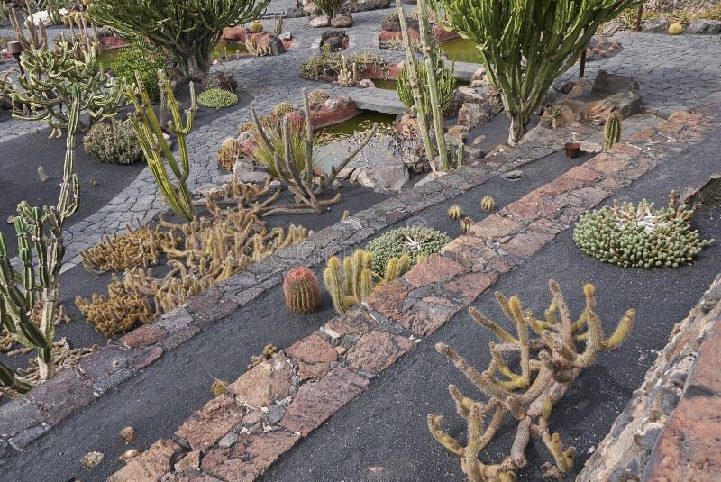 Kaktusgarten in Lanzarote lizenzfreie stockfotos