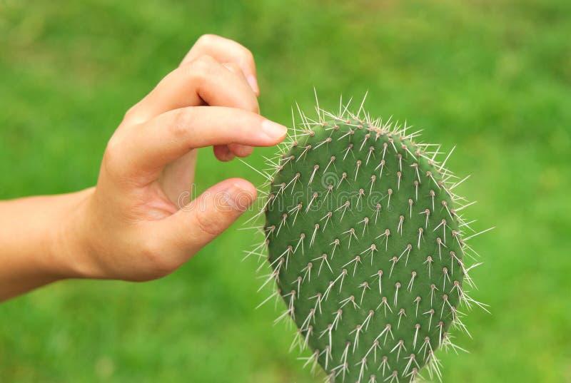 kaktushandtouch arkivbild