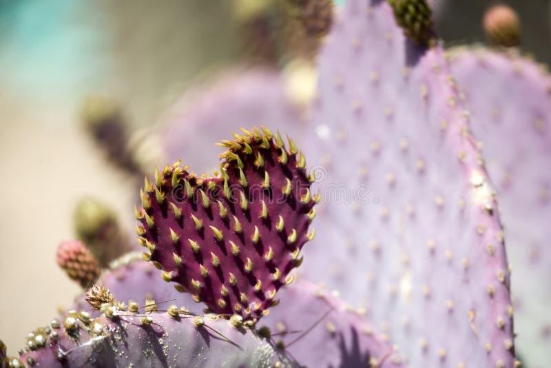Kaktusinneres lizenzfreie stockfotos