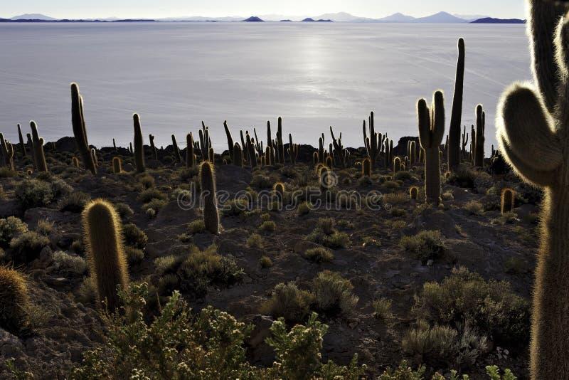kaktusislapescado royaltyfria bilder