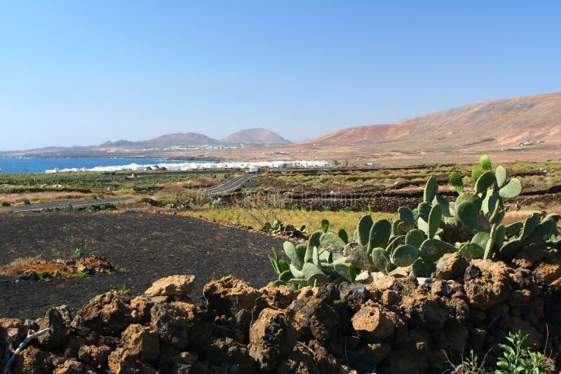 kaktuskanariefågelö lanzarote arkivfoto