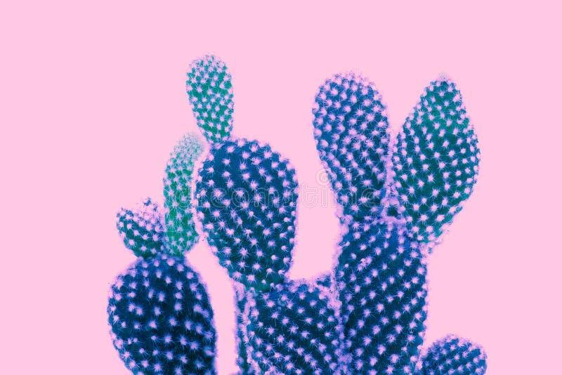 Kaktuskonst arkivbilder