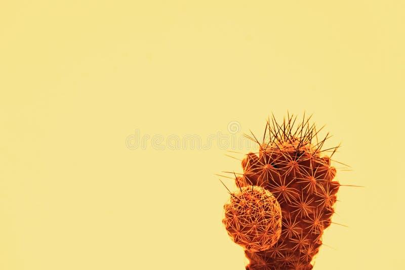 Kaktuskonst royaltyfria bilder