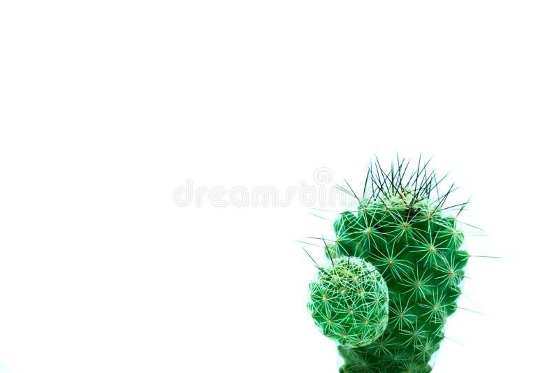 Kaktuskonst royaltyfria foton