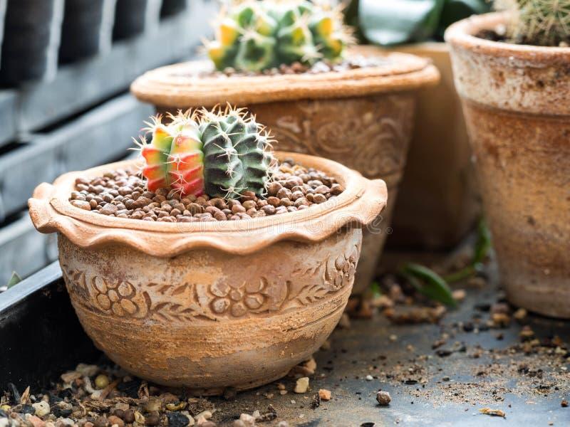 Kaktuskruka med variation av suckulenter royaltyfria bilder