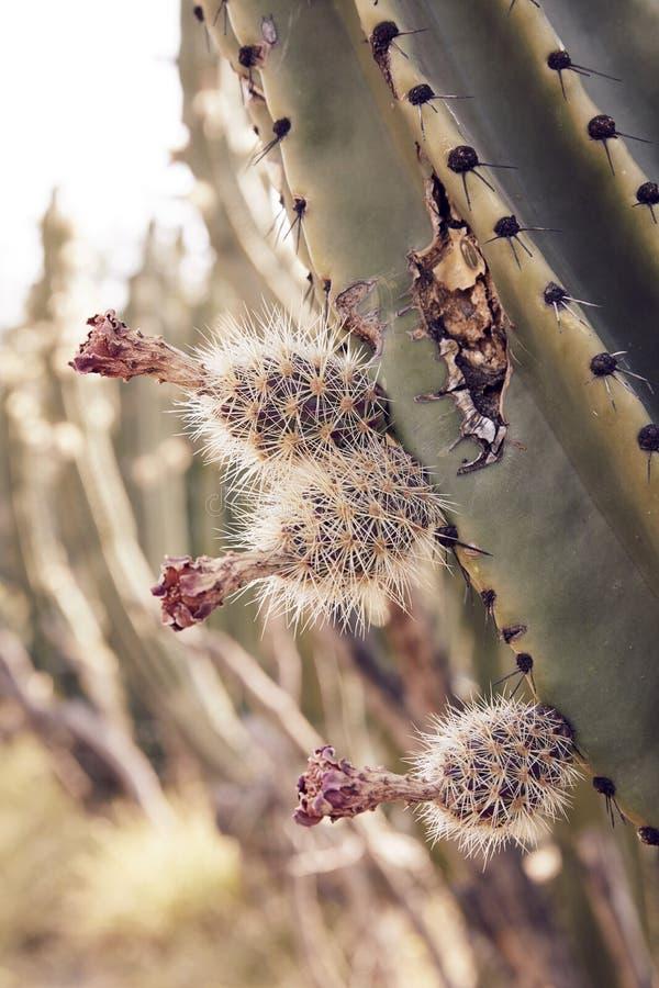 Kaktuslandschaft in der Wüste stockbilder