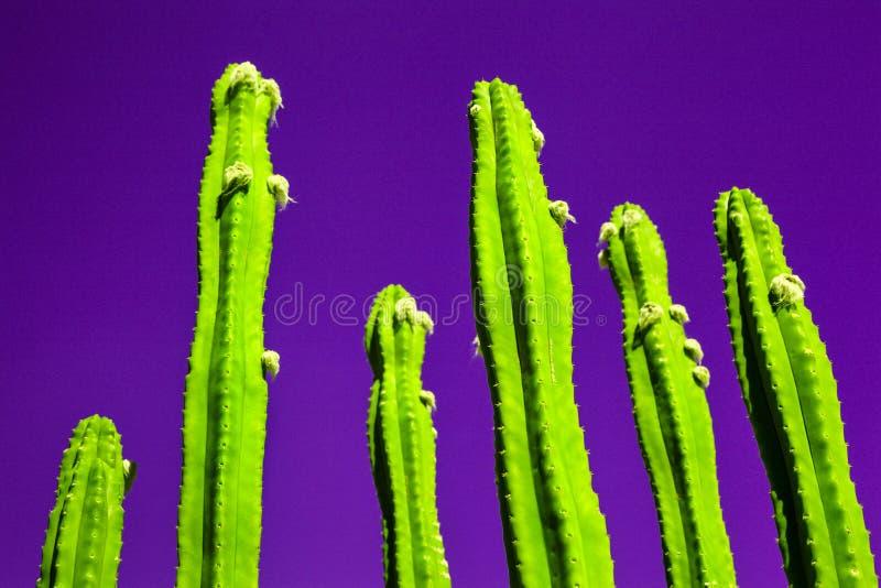 Kaktusmode ställde in på violett bakgrund, modeneonstil för design arkivbilder