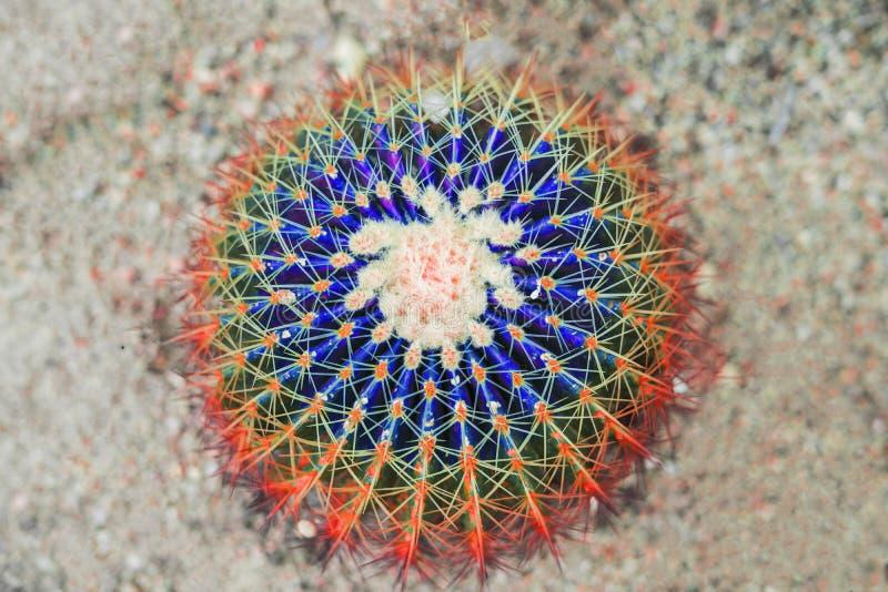 Kaktusmodedesign Minsta Stillife Moderiktiga ljusa färger Grönt neonlynne på rosa bakgrund arkivbilder