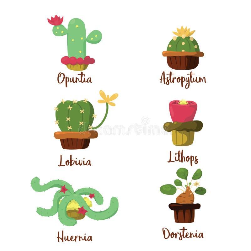 Kaktusmuffin royaltyfria bilder