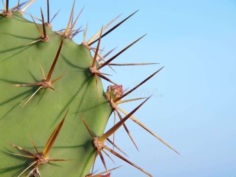 kaktusopuntia arkivbild