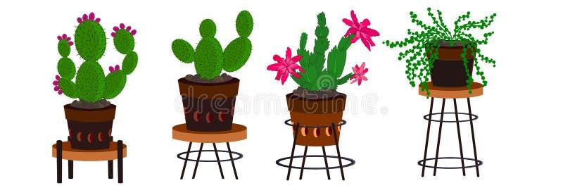 Kaktusordningsillustrationer stock illustrationer