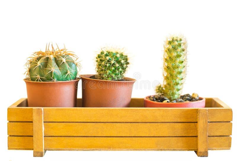 Kaktusowa kolekcja w małych kwiatów garnkach odizolowywa na bielu zdjęcia stock
