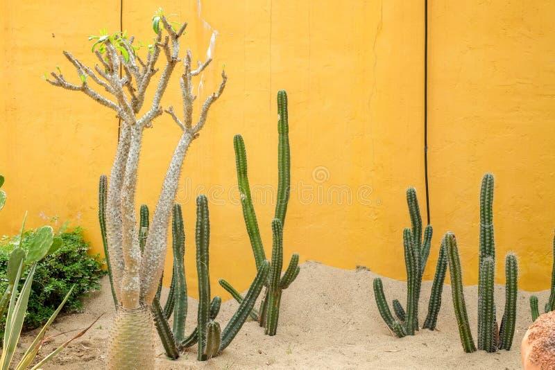 Kaktusowa tłustoszowata roślina w szklarni zdjęcia stock
