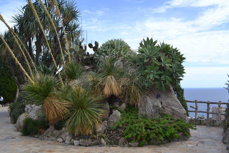 Kaktusowa wyspa zdjęcie royalty free