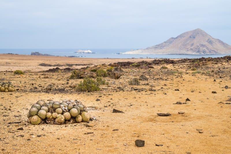 Kaktusowe piłki w Niecki De Azucar parku narodowym w Chile fotografia royalty free