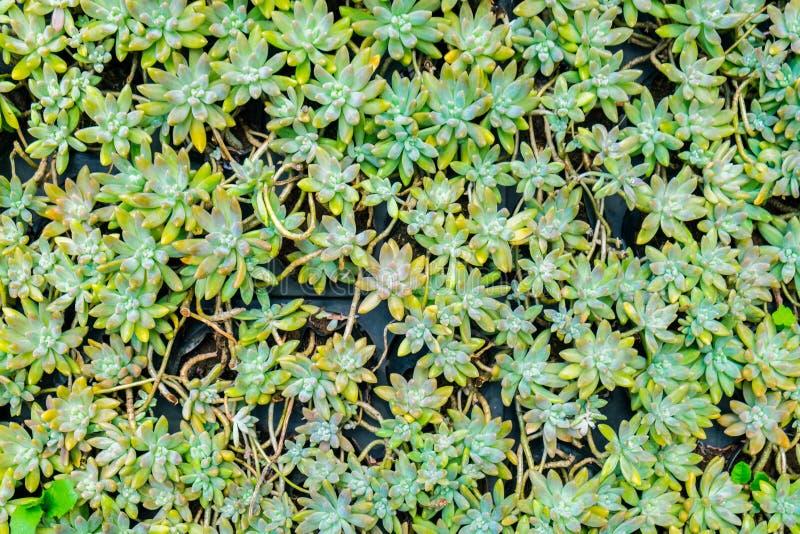 Kaktusowego kształta zaokrąglony śliczny mały zdjęcie royalty free