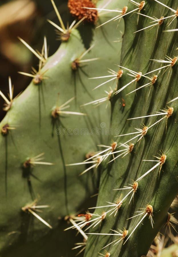 Kaktusowi kręgosłupów cienie fotografia stock