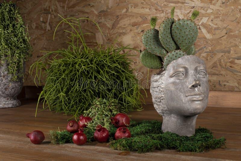Kaktusowy dorośnięcie w garnkach kształtował jak ludzkiej głowy statua zdjęcia stock