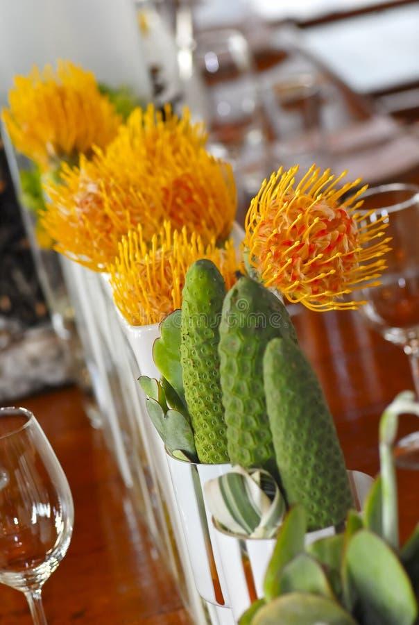 kaktusowy flowera zasadza protea małego zdjęcia royalty free