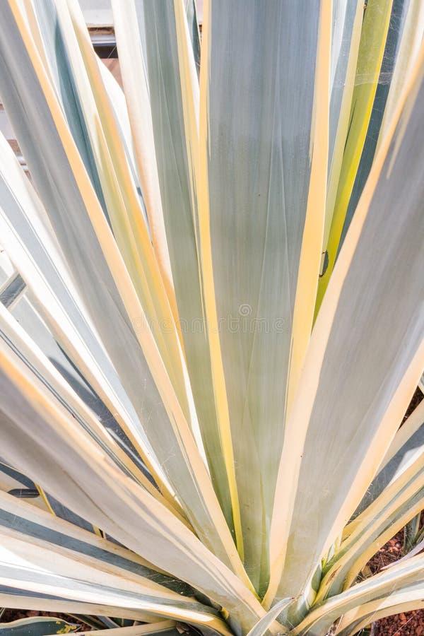 Kaktusowy liścia wzoru tło zdjęcia royalty free