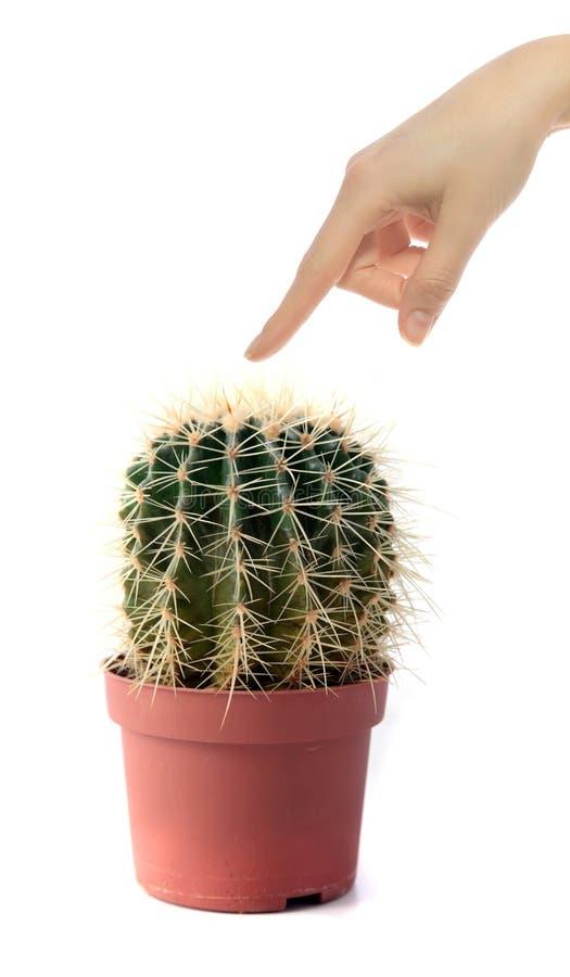 kaktusowy macanie zdjęcia stock