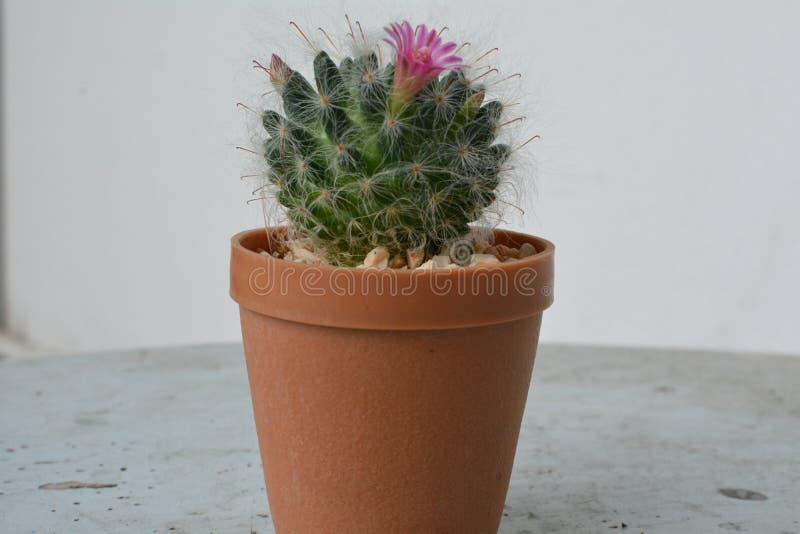 Kaktusowy przyjemny i obraz stock