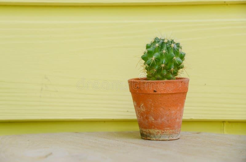 Kaktusowy tło i dekorujący obrazy stock