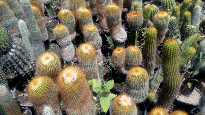Kaktuspflanze in der Wintersaison lizenzfreies stockfoto