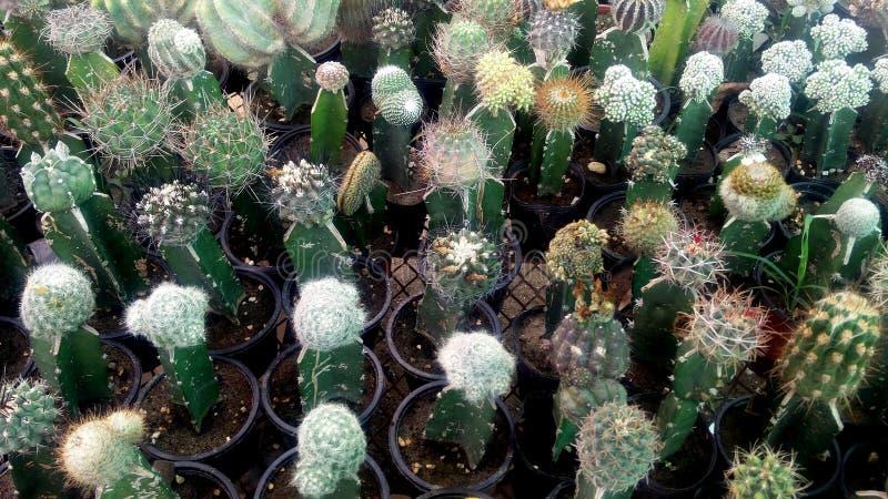 Kaktuspflanze in der Wintersaison lizenzfreie stockfotografie