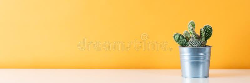 Kaktuspflanze im Metalltopf Eingemachte Kaktuszimmerpflanze auf weißem Regal gegen Pastell färbte Wand Kaktusfahne stockfotografie