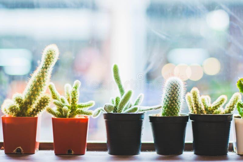 Kaktuspflanze im Topf lizenzfreie stockbilder