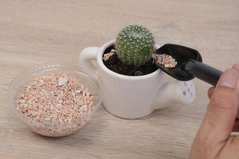 Kaktuspflanzen lizenzfreie stockfotografie
