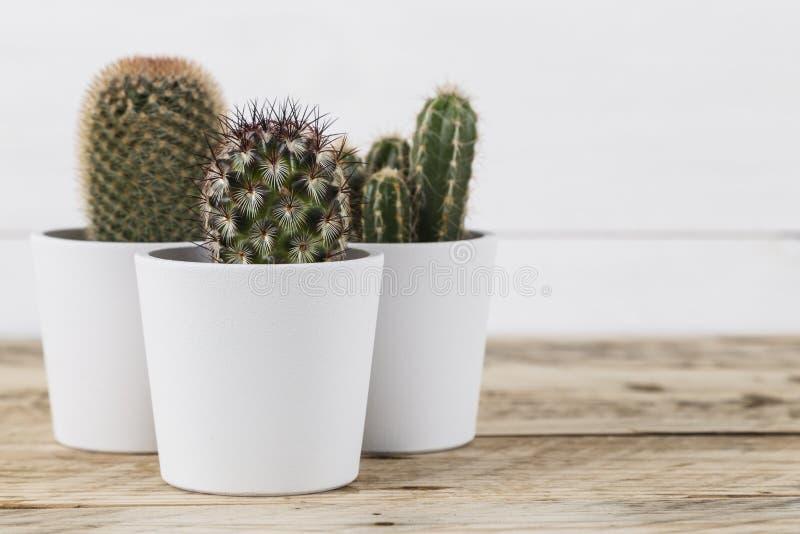 Kaktuspflanzen in den Töpfen lizenzfreie stockfotografie