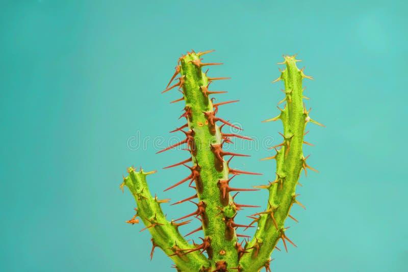 Kaktussamlingslandskap arkivfoton