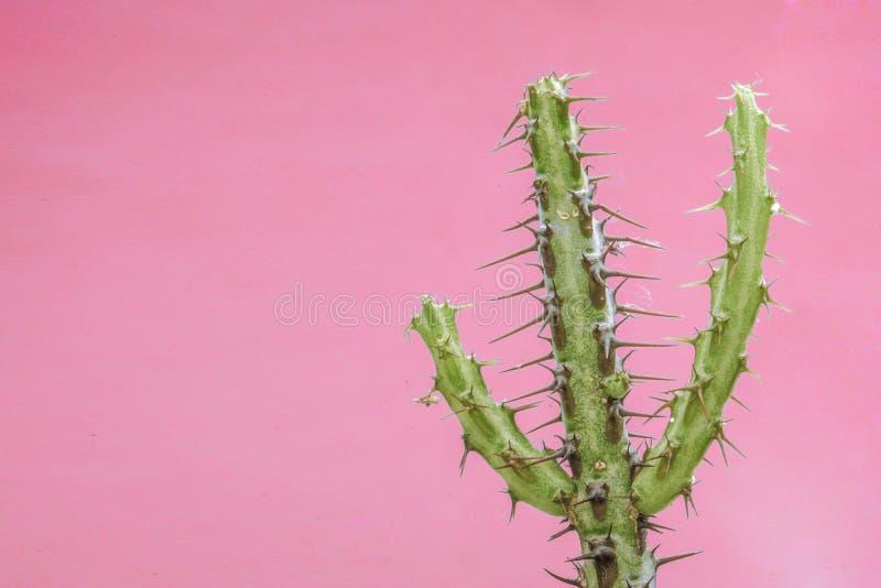 Kaktussamlingslandskap royaltyfri bild