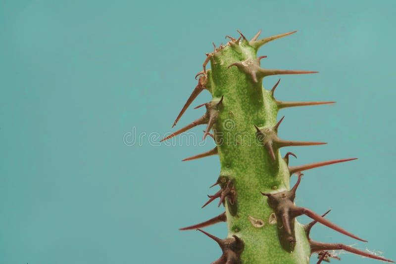 Kaktussamlingslandskap royaltyfri fotografi