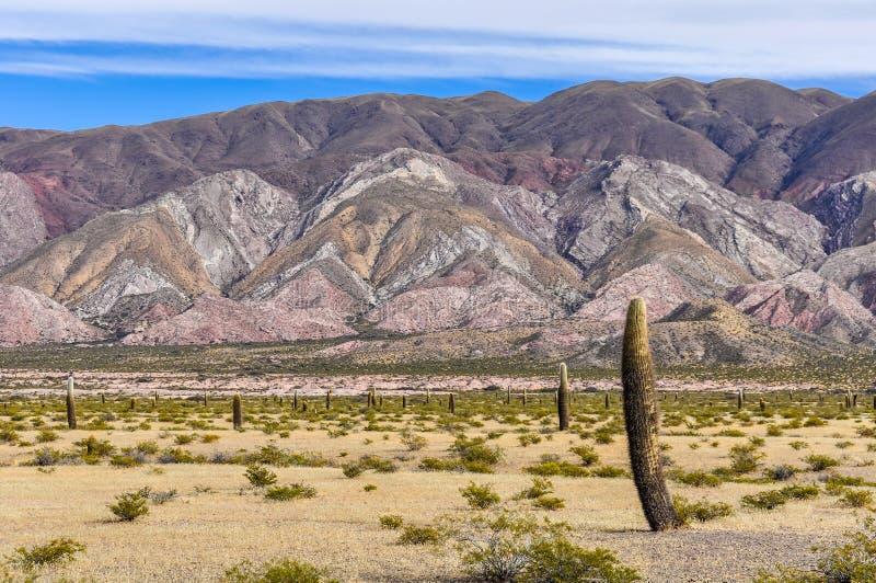 Kaktusskog i nationalparken för los Cardones, Argentina fotografering för bildbyråer