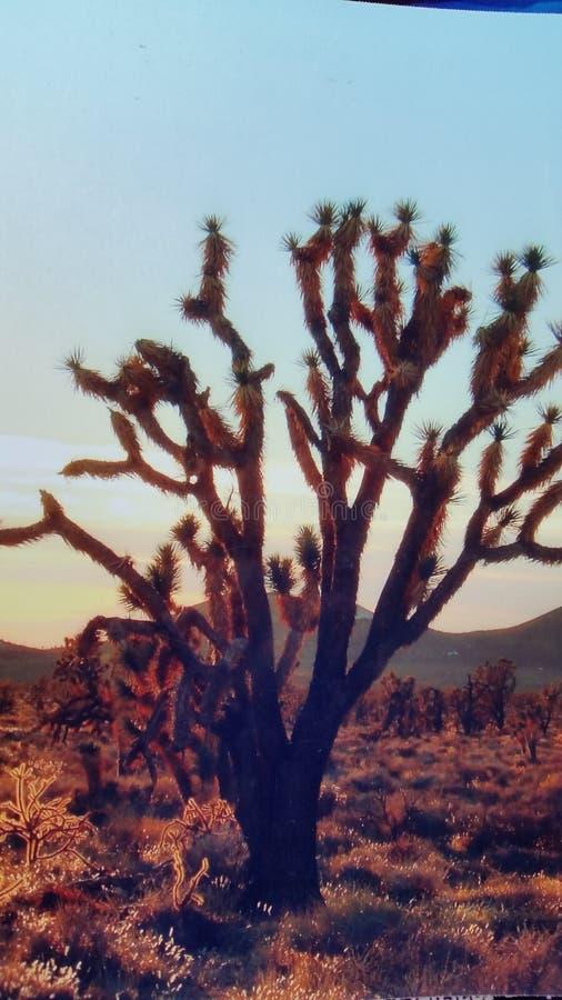Kaktussol royaltyfria bilder